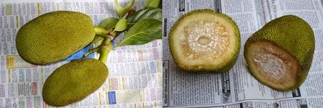 how to cut jackfruit