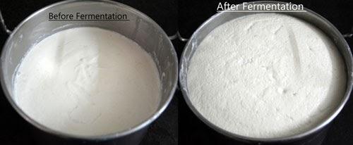 fermented batter